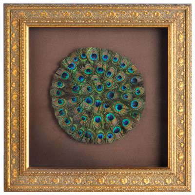 Genuine Peacock Tail Feathers Framed Wall Art. $ 65.49